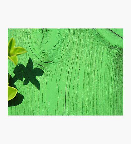 Green Wood Photographic Print