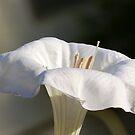 Moon Flower by Penny Odom