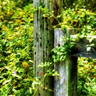 Fence Post by Monica M. Scanlan