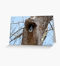 White-Breasted Nuthatch (Sitta carolinensis) 1 Greeting Card