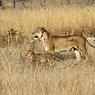 Learning the bush from mom! by Anthony Goldman