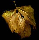 Back of Sycamore Leaf by Barbara Wyeth