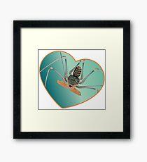 Amblypygi love - Acanthophrynus coronatus Framed Print