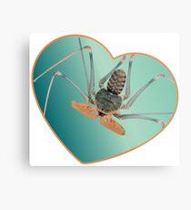 Amblypygi love - Acanthophrynus coronatus Metal Print
