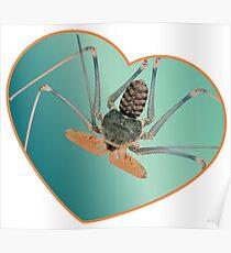 Amblypygi love - Acanthophrynus coronatus Poster