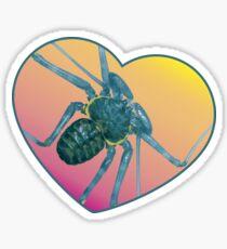 Amblypygi love - Phrynus whitei Glossy Sticker