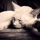Animal Lover Calendar 2011 by lokanin