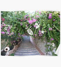 Red and White Bougainvillea  Poster