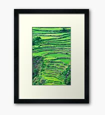 rice field Framed Print