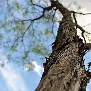 Beautiful Tree Rising Above the Ground by AlexJeffery