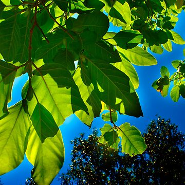 Bright Green Leaves against a Blue Backdrop by AlexJeffery