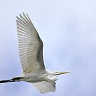 Giant Egret In Florida by Deborah  Benoit