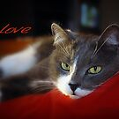 The Look of Love © Vicki Ferrari by Vicki Ferrari