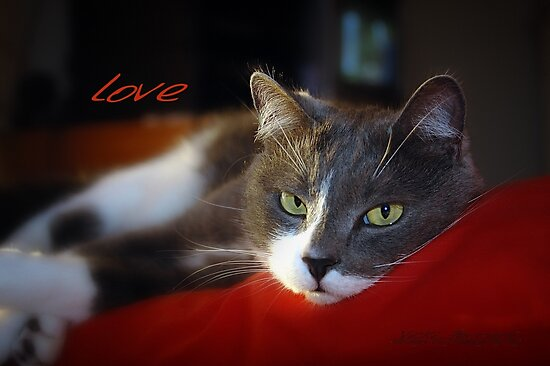 The Look of Love © Vicki Ferrari by Vicki Ferrari