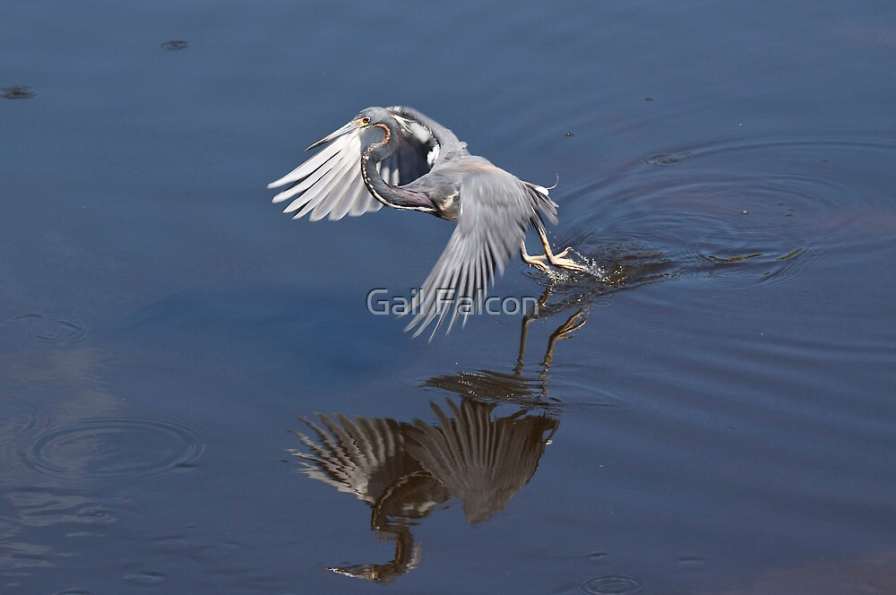 Lift Off! by Gail Falcon