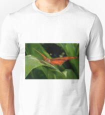 Julia Heliconian butterfly, (Dryas Iulia) Unisex T-Shirt
