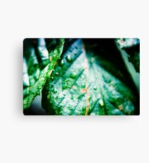Natures Sweat Canvas Print