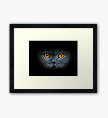 Lizzi Framed Print