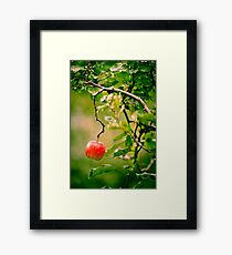 OnePhotoPerDay Series: 273 by L. Framed Print