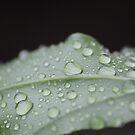 Rain Drops by bbarnard