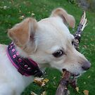 Princess with her new collar by KanaShow