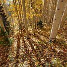 Fall Shadows by Clayhaus
