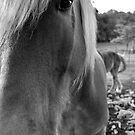 Horse by Esherpah