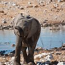 Unruly trunk by Owed To Nature