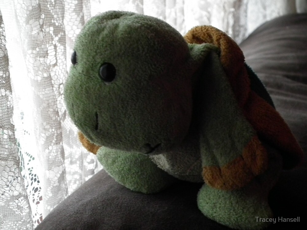 Turtle by Tracey Hansell