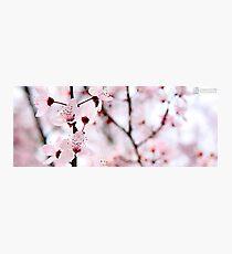 Pretty Pink Photographic Print
