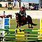 Competiton Horse and Rider