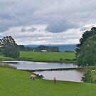 Quality pasture, Strzelecki Ranges, Gippsland, Victoria. by johnrf