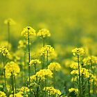 Yellow Smell by Antanas