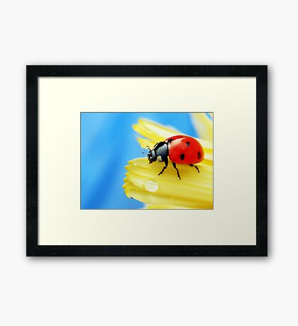 A bright little lady.. Framed Print