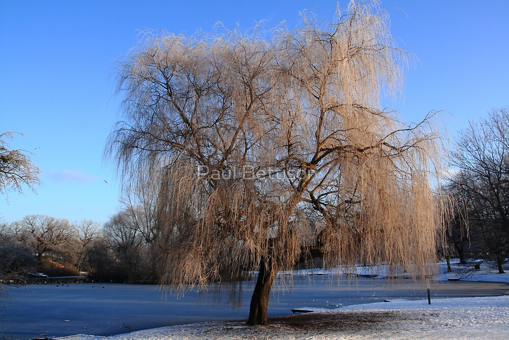 Winter Willow by Paul Bettison