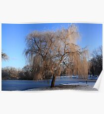 Winter Willow Poster