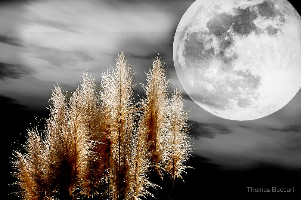 Pampas Grass in the Moonlight by TJ Baccari Photography