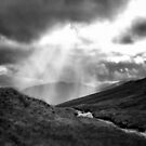 Sun Stream by Andrew Ness - www.nessphotography.com