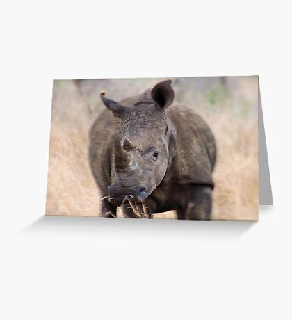 ON A CHARGE - THE WHITE RHINOCEROS – Ceratotherium simum Greeting Card