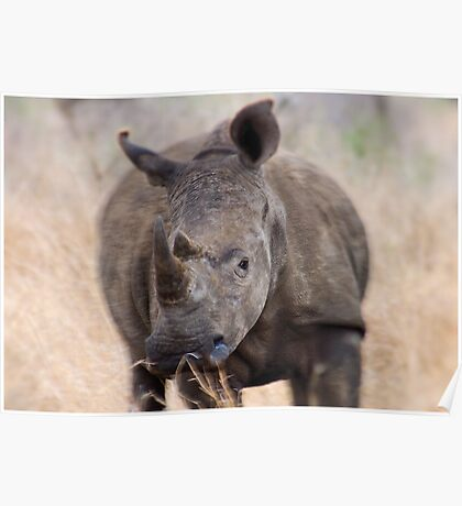 ON A CHARGE - THE WHITE RHINOCEROS – Ceratotherium simum Poster