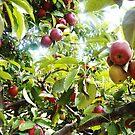 Apple Picking! by DearMsWildOne
