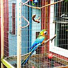 This Parrot  by DearMsWildOne