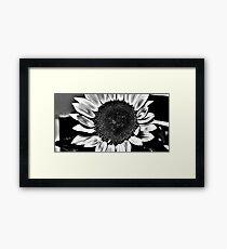 Sun Flower Suit Framed Print