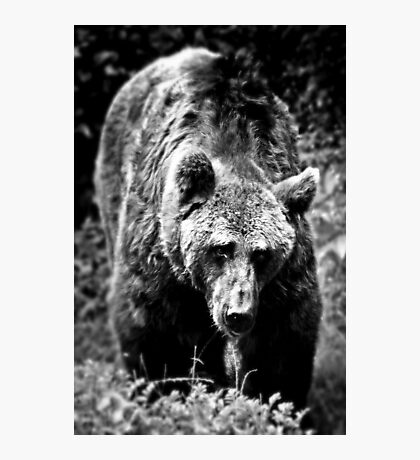 Bear Essentials Photographic Print