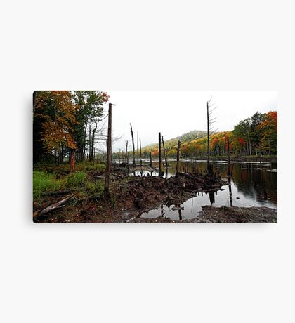 Autumn Color - Light Morning Rain Canvas Print