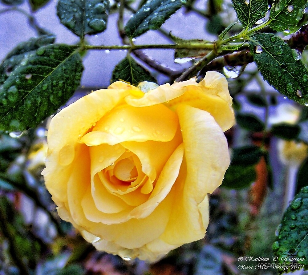 Yellow Rose by rocamiadesign