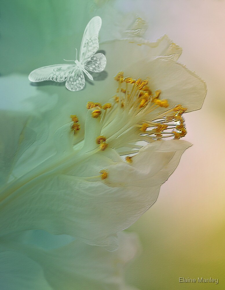 White Butterfly  by Elaine  Manley