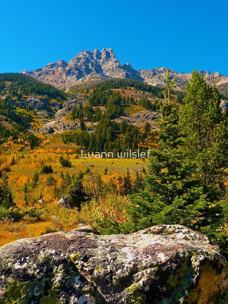 Tetons in the Fall by Luann wilslef