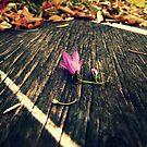 Fall Flower by eleveneleven