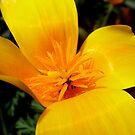 Golden Pollen by Melissa Park